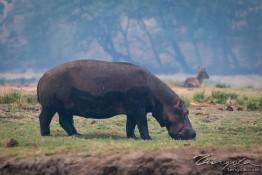 Chobe, Botswana img_0026