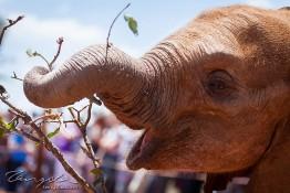 D. Sheldrick Wildlife Trust, Kenya img_6756