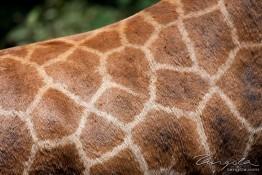 D. Sheldrick Wildlife Trust, Kenya img_6961