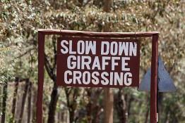 D. Sheldrick Wildlife Trust, Kenya img_7062