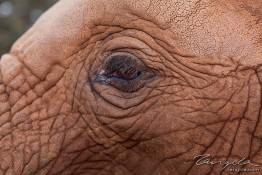 D. Sheldrick Wildlife Trust, Kenya img_7122