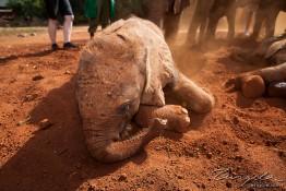 D. Sheldrick Wildlife Trust, Kenya img_7135