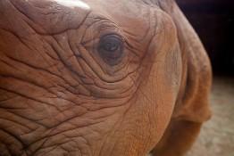 D. Sheldrick Wildlife Trust, Kenya img_7189