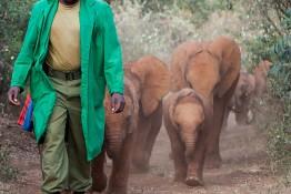 D. Sheldrick Wildlife Trust, Kenya img_7212