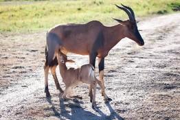 Masai Mara NP, Kenya img_7569