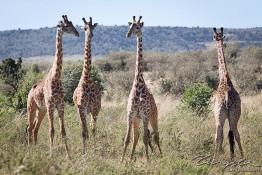 Masai Mara NP, Kenya img_7615