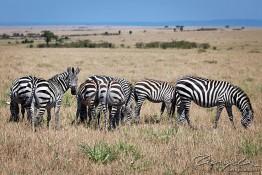 Masai Mara NP, Kenya img_7748