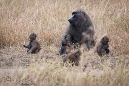 Masai Mara NP, Kenya img_8057