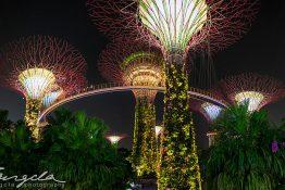 Singapore tngf2944_pano