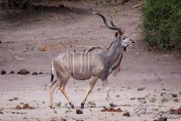 Chobe, Botswana img_0155