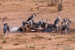 Chobe, Botswana img_0229