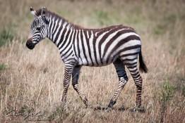 Masai Mara NP, Kenya img_7733