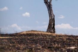 Masai Mara NP, Kenya img_7848