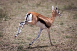 Masai Mara NP, Kenya img_7904
