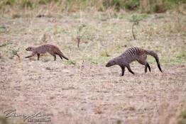 Masai Mara NP, Kenya img_7998