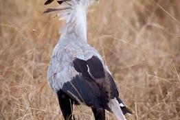 Masai Mara NP, Kenya img_8079
