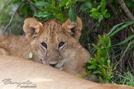 Masai Mara NP, Kenya img_8113