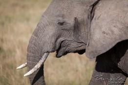 Masai Mara NP, Kenya img_8159