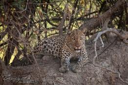 Kafue NP, Zambia img_9157