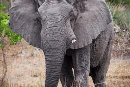 Kafue NP, Zambia img_9492