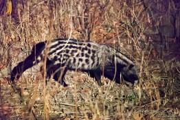 Kafue NP, Zambia img_9622
