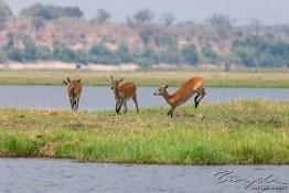 Chobe, Botswana img_9735