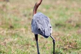 Chobe, Botswana img_9803