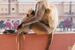 Jaipur, India img_2682