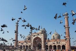 Delhi, India nv0a6621