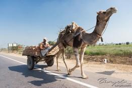Agra, India nv0a7382